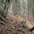 Maschtl im Wald
