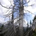 dieser Baum ist tot