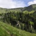 saftige Almwiesen
