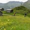 Ferdl wandert über Almwiesen