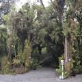 rainforest holiday park