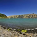 Bucht bei Akaroa / Banks Peninsula (Südinsel)