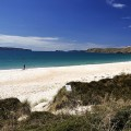 Strand nördlich von Whitianga / Coromandel Peninsula (Nordinsel)