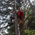 Tommi springt schon mal auf einen Baum
