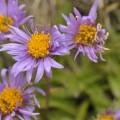 ich erlaube mir Blumenfotos :-)