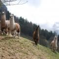 Andere Hirsche?